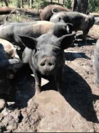Dirty Feed, Done Dirt Cheap